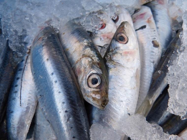 沙丁鱼的营养和健康益处有哪些?