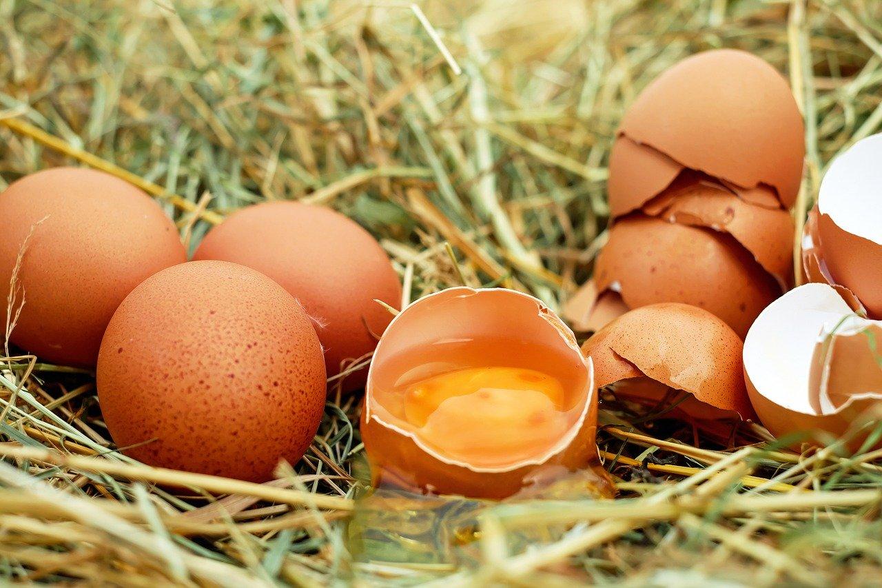 鸡蛋减肥计划:只吃鸡蛋能减肥吗?