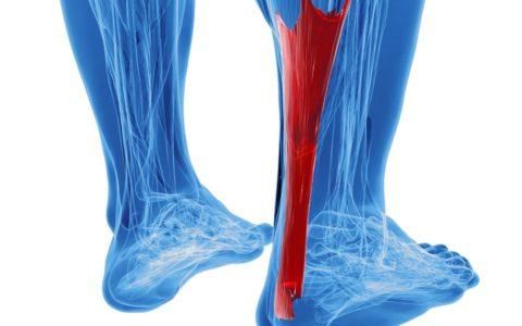 随着年龄的增长,如何保持肌腱健康?
