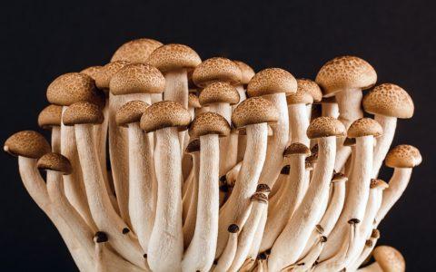 蘑菇对减肥的好处有哪些?坏处有哪些?