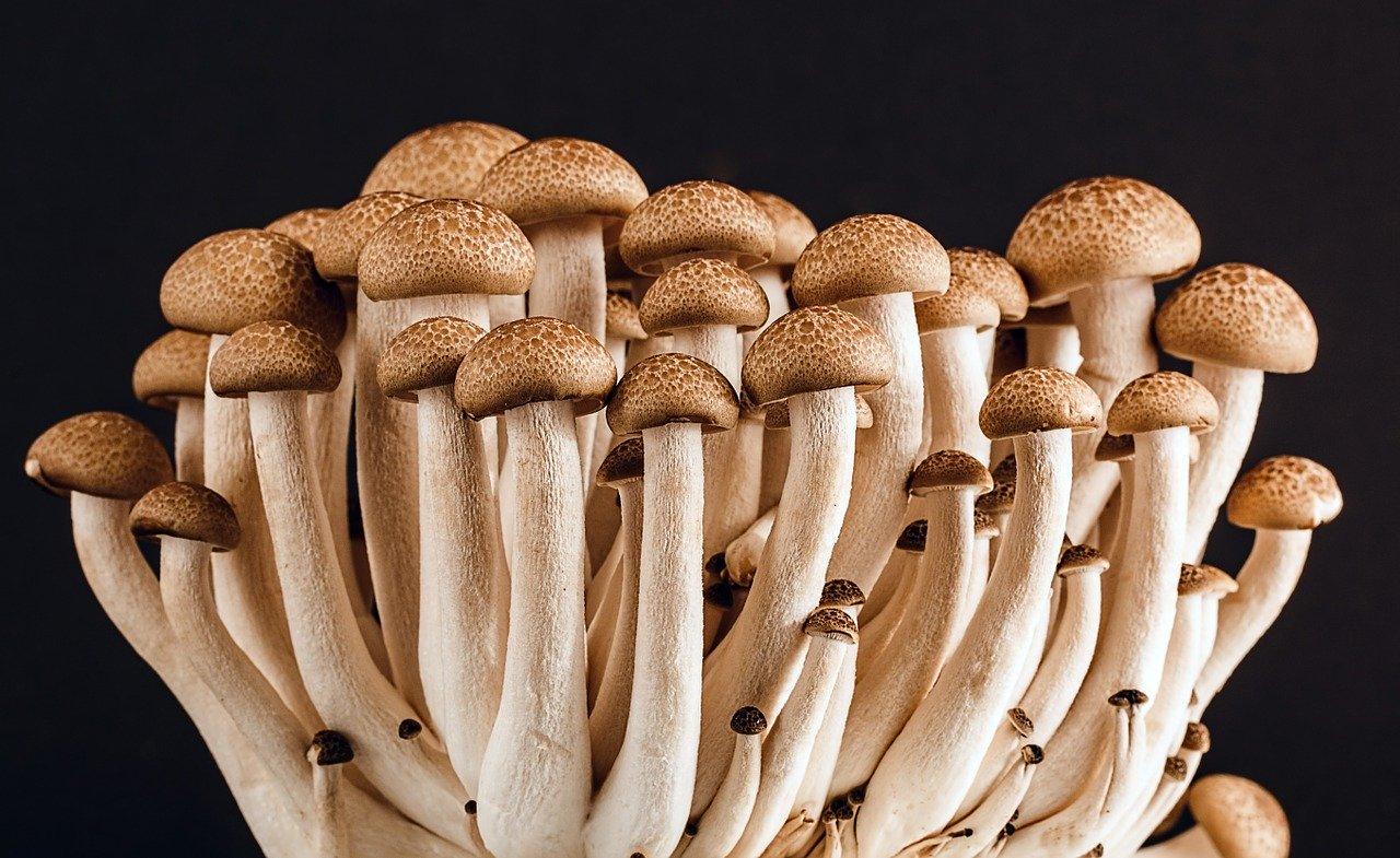 关于蘑菇的价值和好处你应该知道这些
